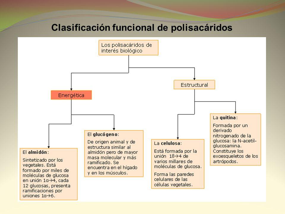 Clasificación funcional de polisacáridos