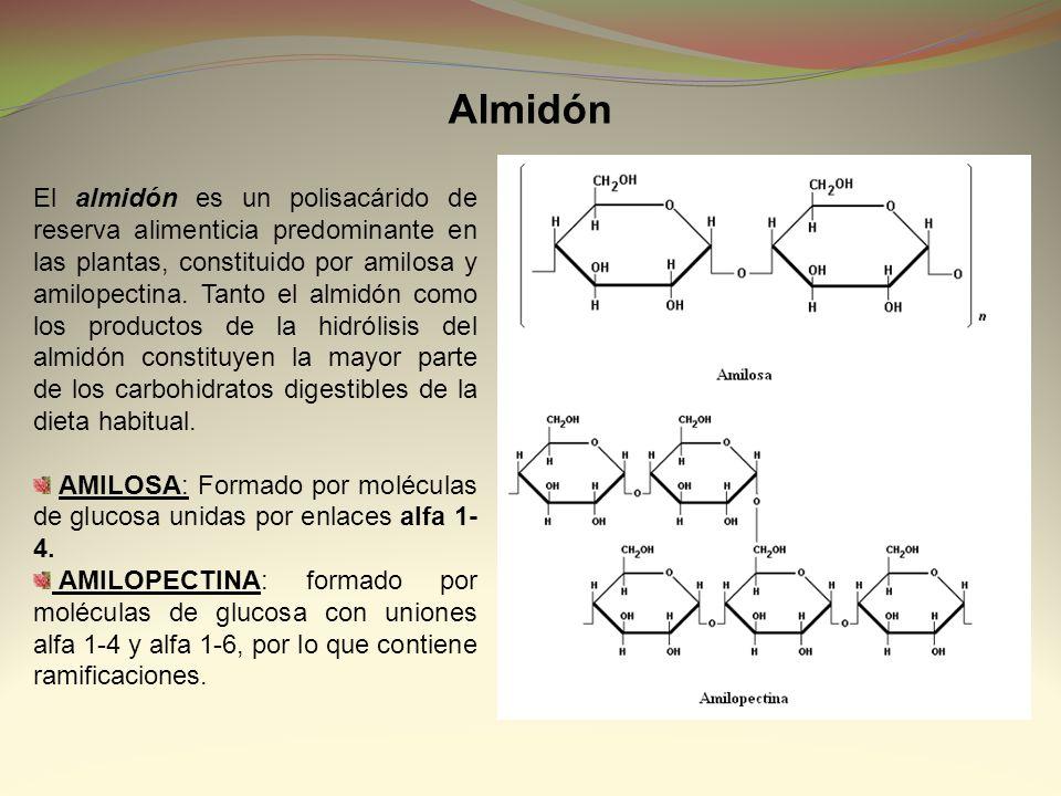 El almidón es un polisacárido de reserva alimenticia predominante en las plantas, constituido por amilosa y amilopectina. Tanto el almidón como los pr