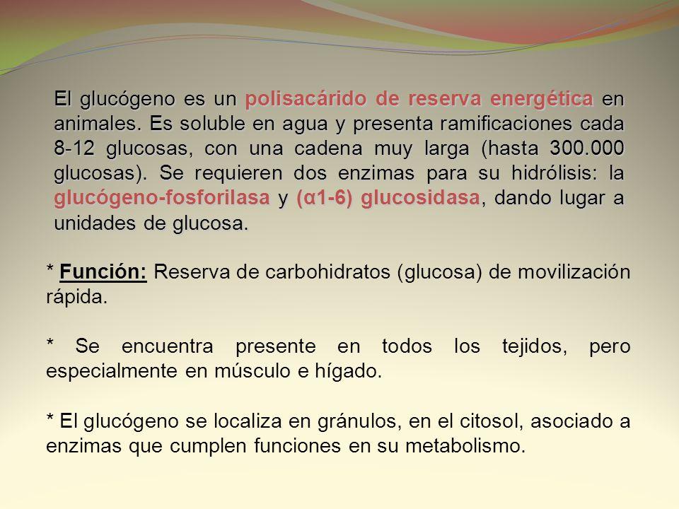 * Función: Reserva de carbohidratos (glucosa) de movilización rápida. * Se encuentra presente en todos los tejidos, pero especialmente en músculo e hí