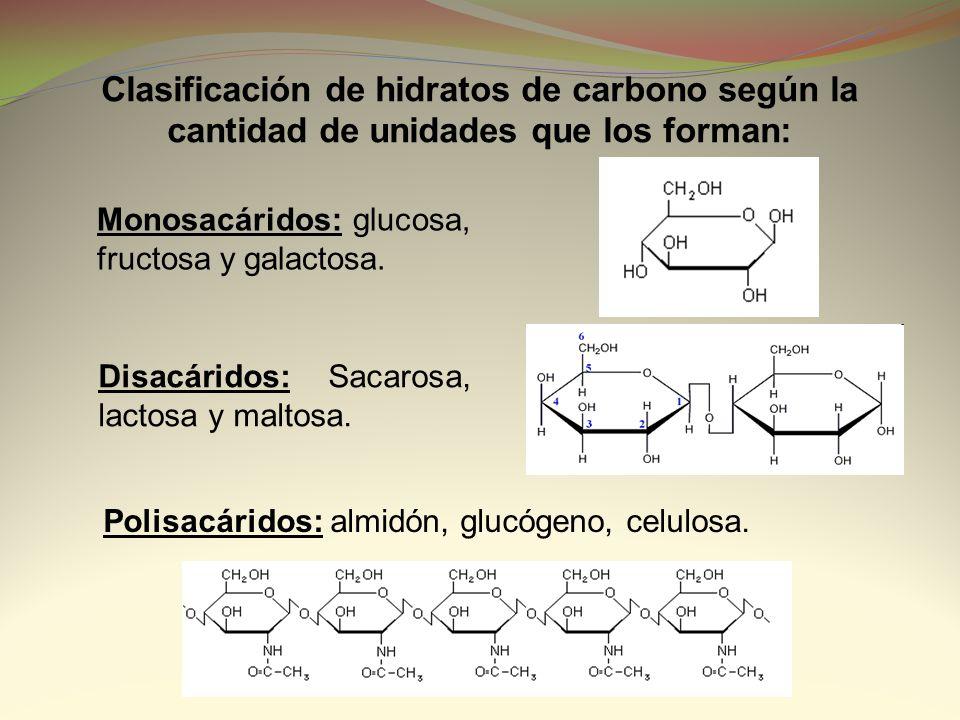 Clasificación de hidratos de carbono según la cantidad de unidades que los forman: Monosacáridos: glucosa, fructosa y galactosa. Disacáridos: Sacarosa