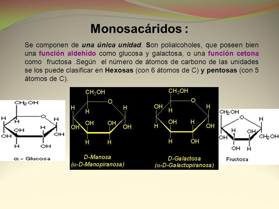 Monosacáridos : Se componen de una única unidad. Son polialcoholes, que poseen bien una función aldehído como glucosa y galactosa, o una función ceton