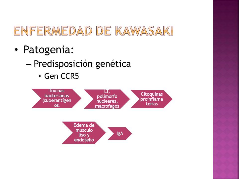 Toxinas bacterianas (superantígen os ) LT, polimorfo nucleares, macrófagos Citoquinas proinflama torias Edema de musculo liso y endotelio IgA Patogeni