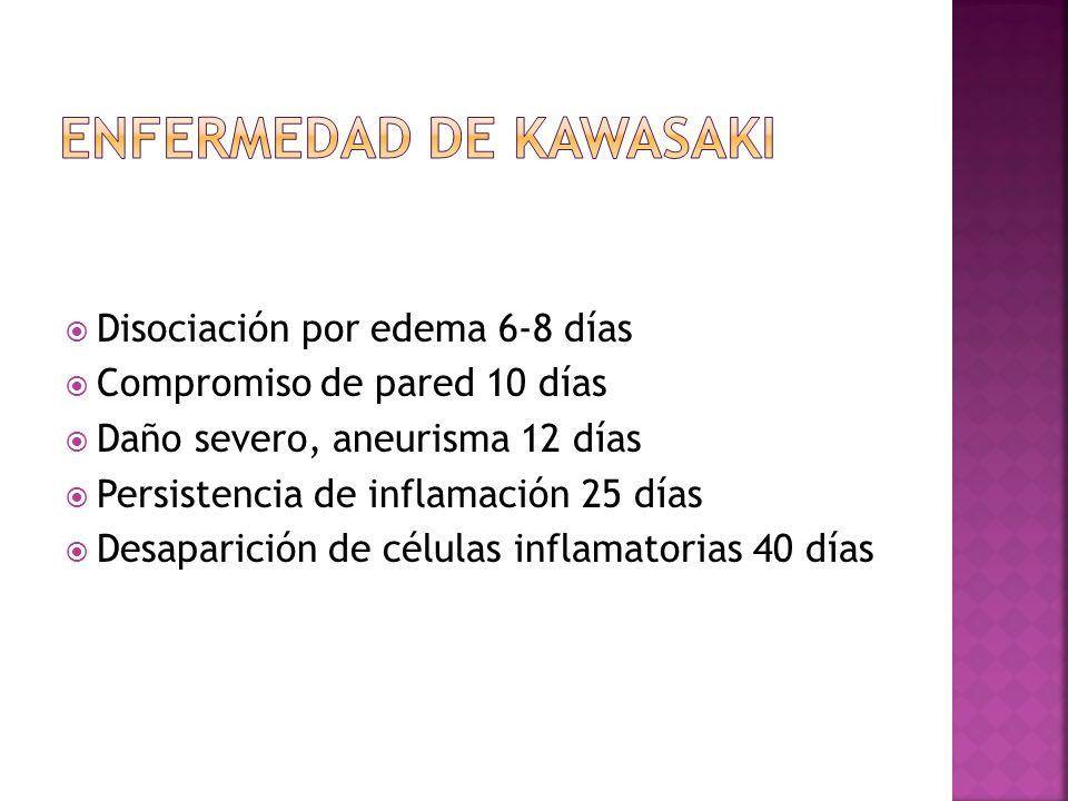Disociación por edema 6-8 días Compromiso de pared 10 días Daño severo, aneurisma 12 días Persistencia de inflamación 25 días Desaparición de células
