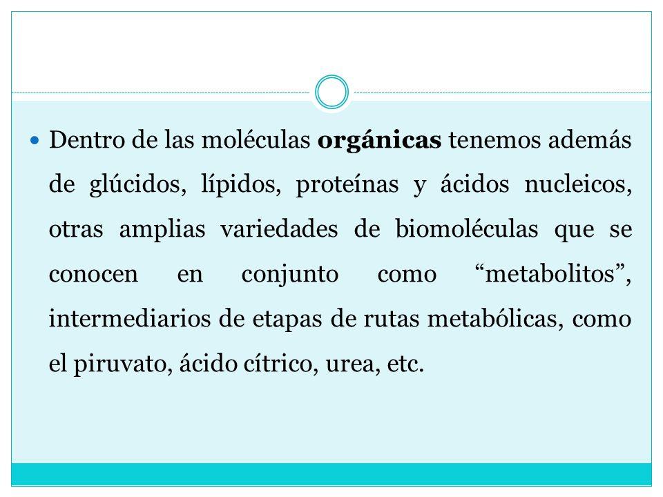 Dentro de las moléculas orgánicas tenemos además de glúcidos, lípidos, proteínas y ácidos nucleicos, otras amplias variedades de biomoléculas que se c