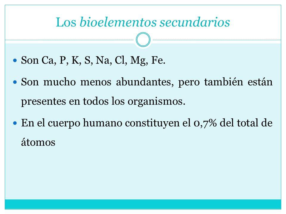 Los bioelementos secundarios Son Ca, P, K, S, Na, Cl, Mg, Fe. Son mucho menos abundantes, pero también están presentes en todos los organismos. En el