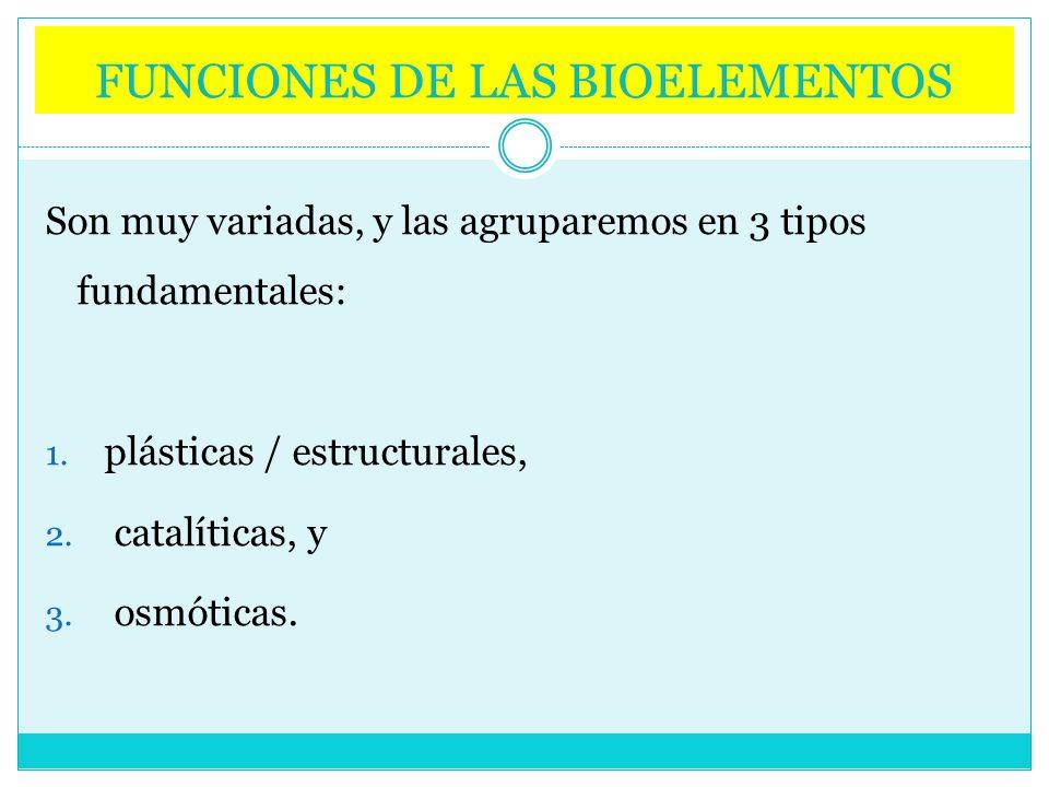 FUNCIONES DE LAS BIOELEMENTOS Son muy variadas, y las agruparemos en 3 tipos fundamentales: 1. plásticas / estructurales, 2. catalíticas, y 3. osmótic