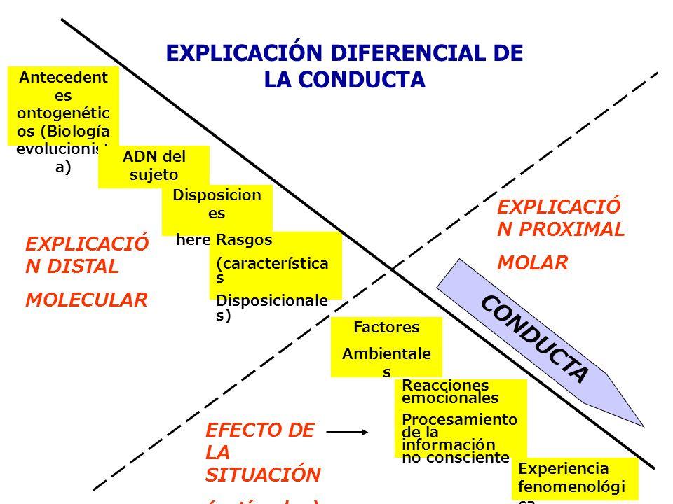 Antecedent es ontogenétic os (Biología evolucionist a) ADN del sujeto Disposicion es heredadas Factores Ambientale s Rasgos (característica s Disposic