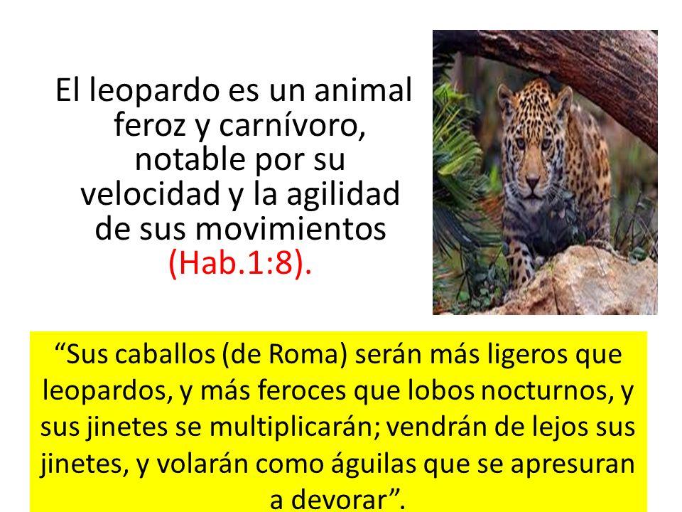 El leopardo es un animal feroz y carnívoro, notable por su velocidad y la agilidad de sus movimientos (Hab.1:8). Sus caballos (de Roma) serán más lige
