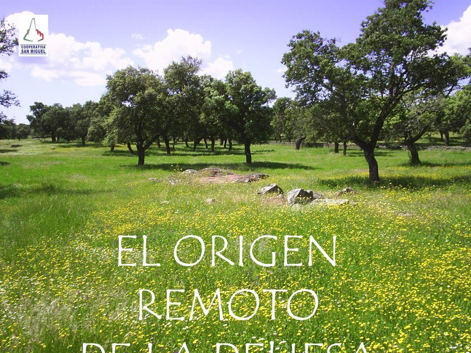 EL ORIGEN REMOTO DE LA DEHESA Juan palomo palomo
