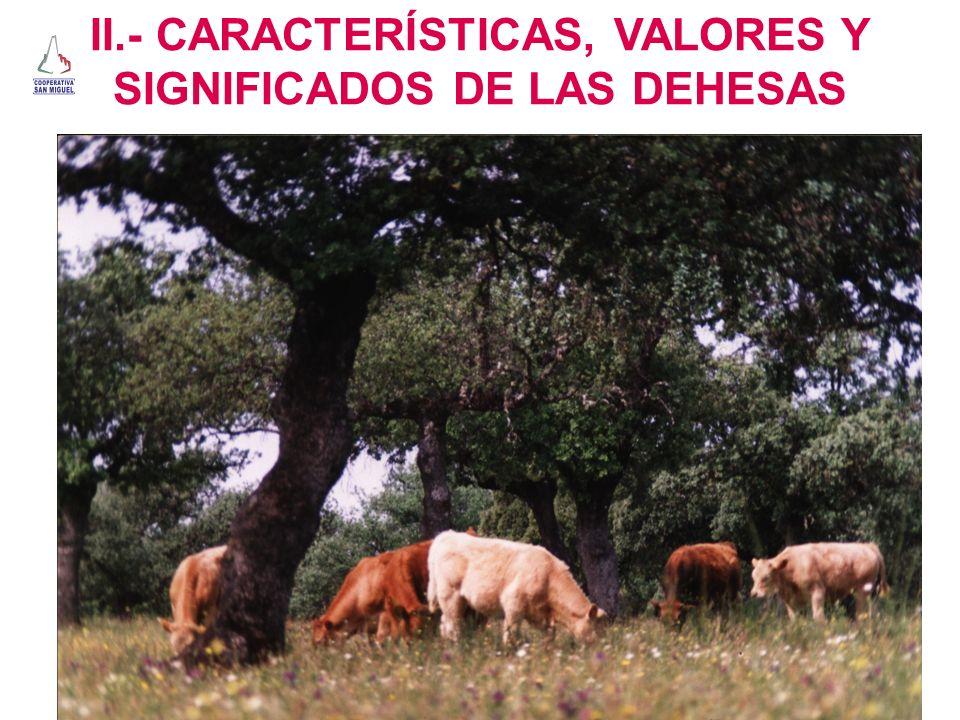 II.- CARACTERÍSTICAS, VALORES Y SIGNIFICADOS DE LAS DEHESAS
