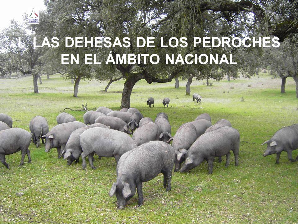 PERO EL CONSUMO HUMANO DE BELLOTAS NO SUPONE LA EXISTENCIA DE DEHESAS.