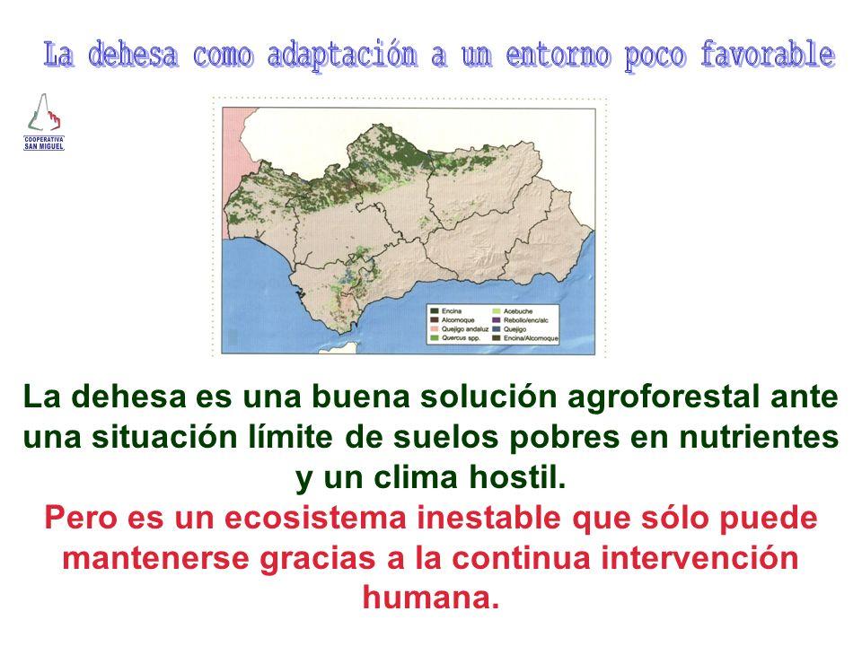 La dehesa es una buena solución agroforestal ante una situación límite de suelos pobres en nutrientes y un clima hostil. Pero es un ecosistema inestab