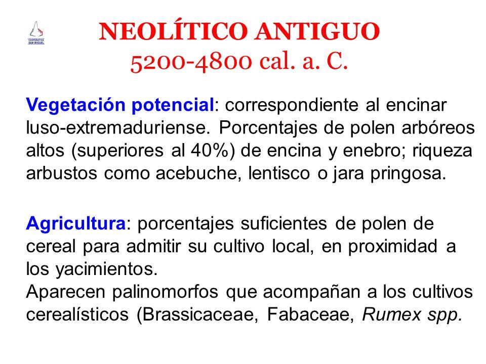 NEOLÍTICO ANTIGUO 5200-4800 cal. a. C. Vegetación potencial: correspondiente al encinar luso-extremaduriense. Porcentajes de polen arbóreos altos (sup