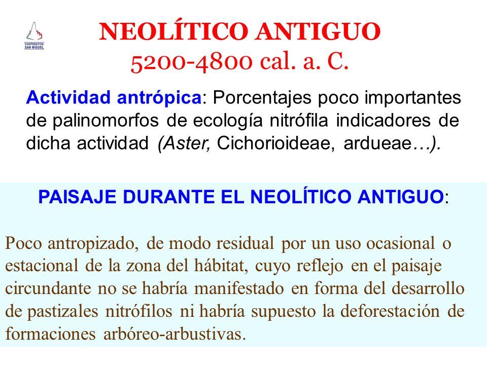 NEOLÍTICO ANTIGUO 5200-4800 cal. a. C. Actividad antrópica: Porcentajes poco importantes de palinomorfos de ecología nitrófila indicadores de dicha ac