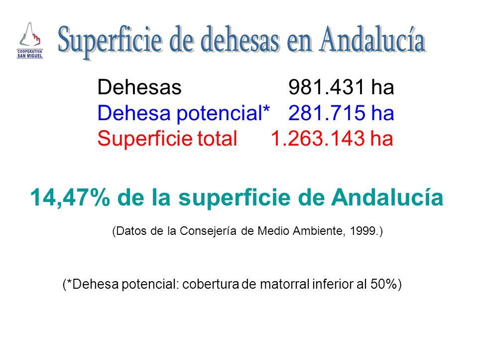 Dehesas981.431 ha Dehesa potencial*281.715 ha Superficie total 1.263.143 ha 14,47% de la superficie de Andalucía (Datos de la Consejería de Medio Ambi