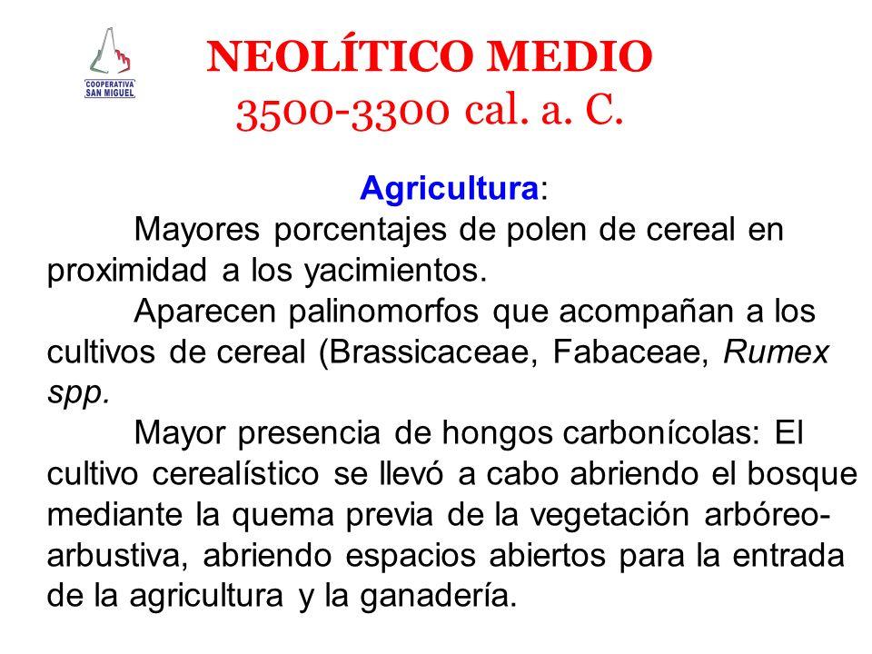 Agricultura: Mayores porcentajes de polen de cereal en proximidad a los yacimientos. Aparecen palinomorfos que acompañan a los cultivos de cereal (Bra