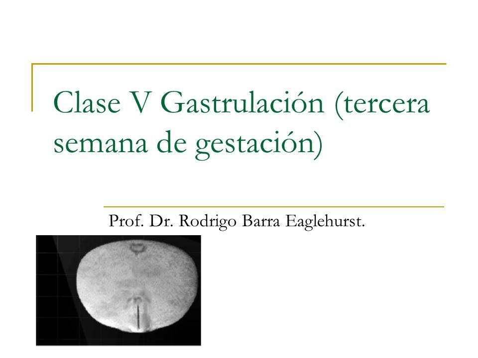Clase V Gastrulación (tercera semana de gestación) Prof. Dr. Rodrigo Barra Eaglehurst.