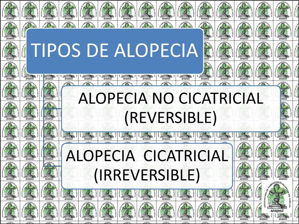 TIPOS DE ALOPECIA ALOPECIA NO CICATRICIAL (REVERSIBLE) ALOPECIA CICATRICIAL (IRREVERSIBLE) 11