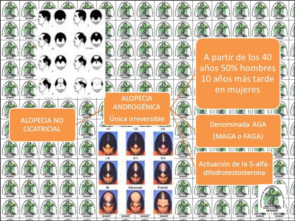 ALOPECIA NO CICATRICIAL ALOPECIA ANDROGÉNICA Única irreversible A partir de los 40 años 50% hombres 10 años más tarde en mujeres Denominada AGA (MAGA