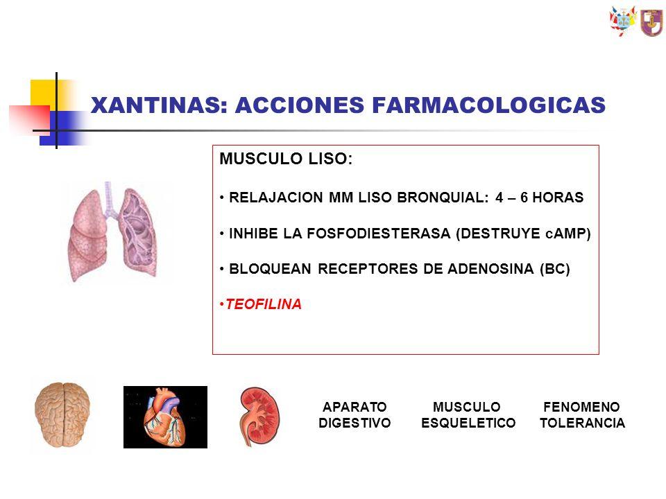 XANTINAS: ACCIONES FARMACOLOGICAS MUSCULO LISO: RELAJACION MM LISO BRONQUIAL: 4 – 6 HORAS INHIBE LA FOSFODIESTERASA (DESTRUYE cAMP) BLOQUEAN RECEPTORE