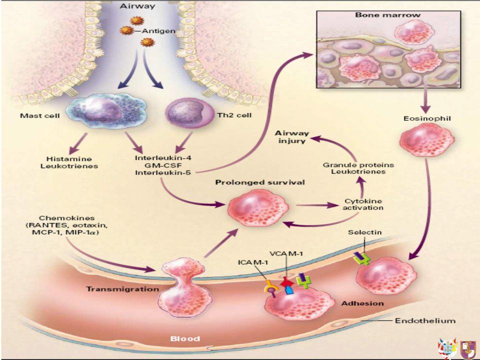 Atopía Factores farmacológicos : aspirina, colorantes (tartrazina), antagonistas Beta adrenérgicos, compuestos sulfurosos Contaminantes ambientales del aire Factores laborales Infecciones Ejercicio