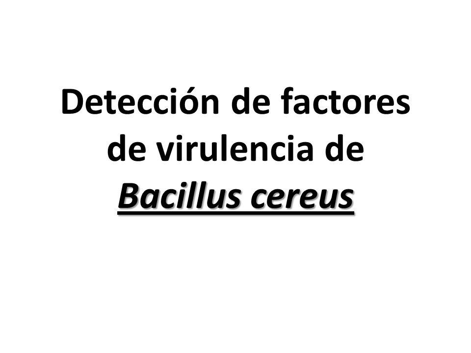 Bacillus cereus Detección de factores de virulencia de Bacillus cereus