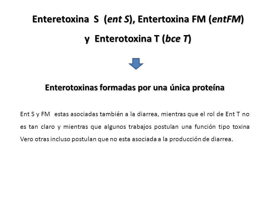 Enteretoxina S (ent S), Entertoxina FM (entFM) y Enterotoxina T (bce T) Enterotoxinas formadas por una única proteína Ent S y FM estas asociadas tambi