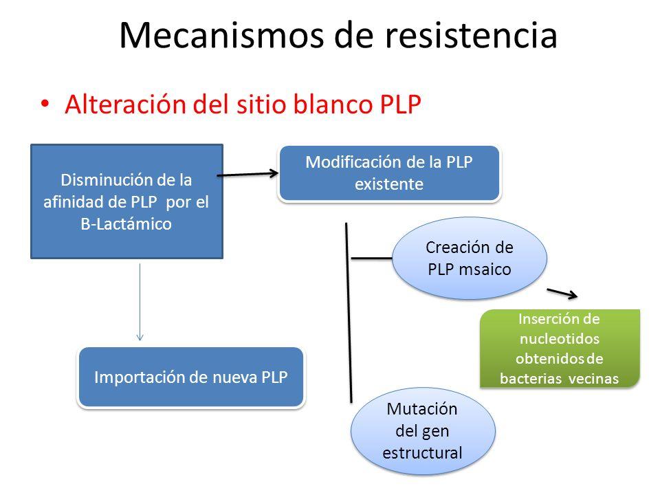 Mecanismos de resistencia Alteración del sitio blanco PLP Disminución de la afinidad de PLP por el B-Lactámico Modificación de la PLP existente Creaci
