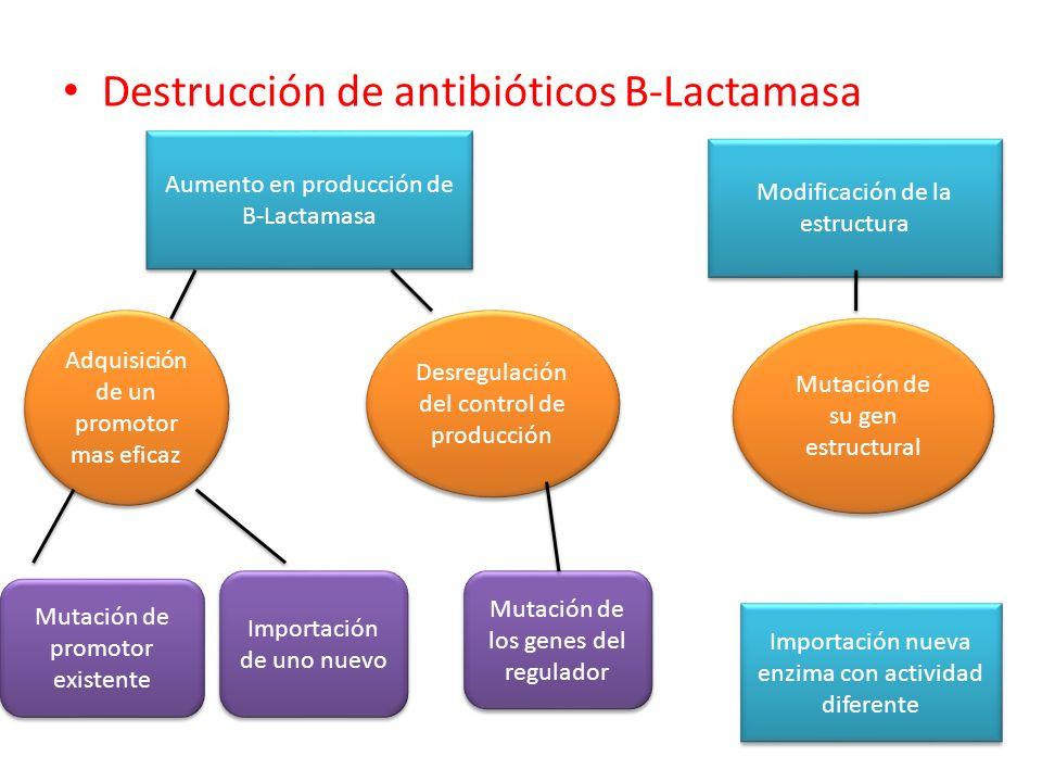 Destrucción de antibióticos B-Lactamasa Aumento en producción de B-Lactamasa Modificación de la estructura Importación nueva enzima con actividad dife