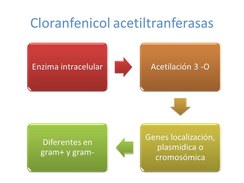 Cloranfenicol acetiltranferasas Enzima intracelularAcetilación 3 -O Genes localización, plasmidica o cromosómica Diferentes en gram+ y gram-