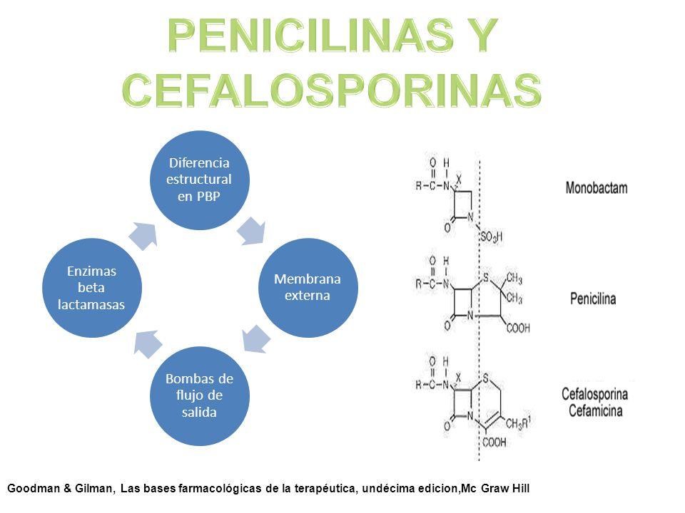 Diferencia estructural en PBP Membrana externa Bombas de flujo de salida Enzimas beta lactamasas Goodman & Gilman, Las bases farmacológicas de la tera