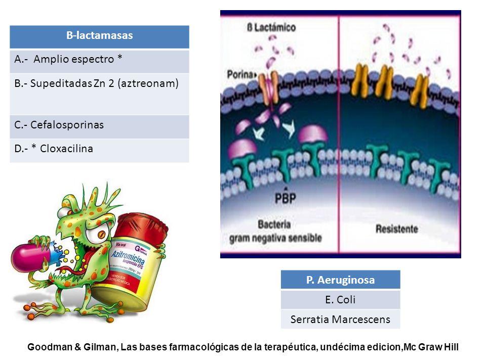 B-lactamasas A.- Amplio espectro * B.- Supeditadas Zn 2 (aztreonam) C.- Cefalosporinas D.- * Cloxacilina P. Aeruginosa E. Coli Serratia Marcescens Goo