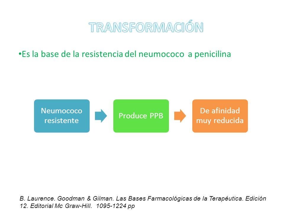 Es la base de la resistencia del neumococo a penicilina Neumococo resistente Produce PPB De afinidad muy reducida B. Laurence. Goodman & Gilman. Las B