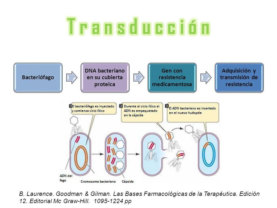 Bacteriófago DNA bacteriano en su cubierta proteica Gen con resistencia medicamentosa Adquisición y transmisión de resistencia B. Laurence. Goodman &
