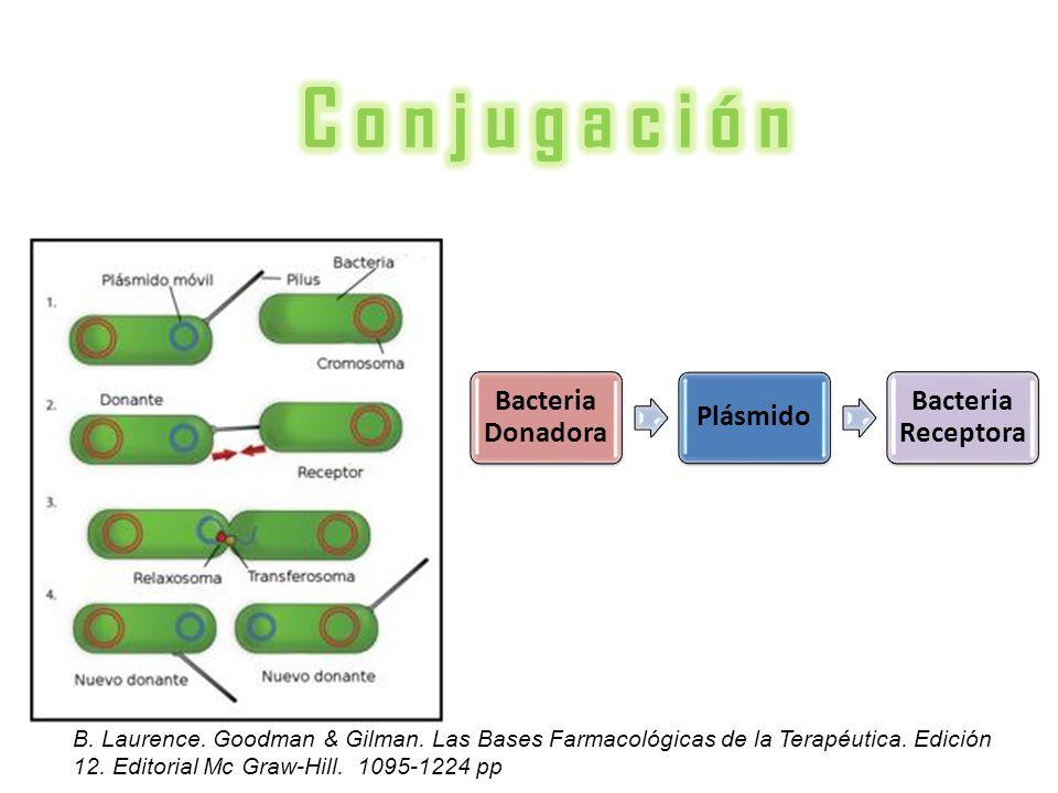 Bacteria Donadora Plásmido Bacteria Receptora B. Laurence. Goodman & Gilman. Las Bases Farmacológicas de la Terapéutica. Edición 12. Editorial Mc Graw