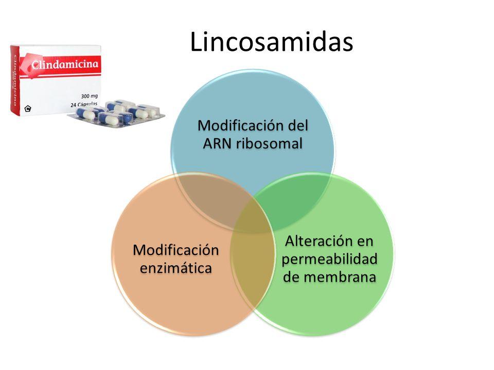 Lincosamidas Modificación del ARN ribosomal Alteración en permeabilidad de membrana Modificación enzimática