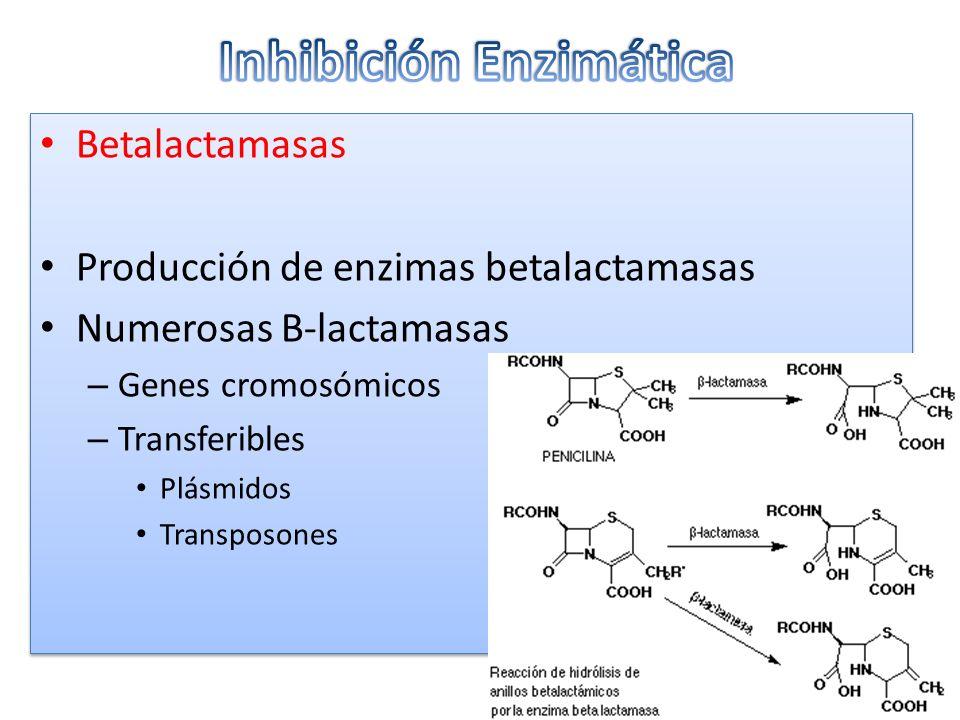 Betalactamasas Producción de enzimas betalactamasas Numerosas B-lactamasas – Genes cromosómicos – Transferibles Plásmidos Transposones Betalactamasas