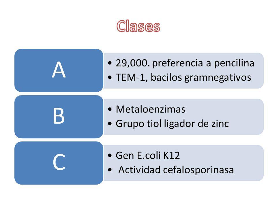 29,000. preferencia a pencilina TEM-1, bacilos gramnegativos A Metaloenzimas Grupo tiol ligador de zinc B Gen E.coli K12 Actividad cefalosporinasa C