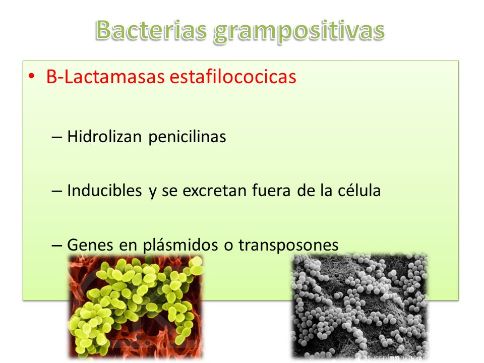 B-Lactamasas estafilococicas – Hidrolizan penicilinas – Inducibles y se excretan fuera de la célula – Genes en plásmidos o transposones B-Lactamasas e