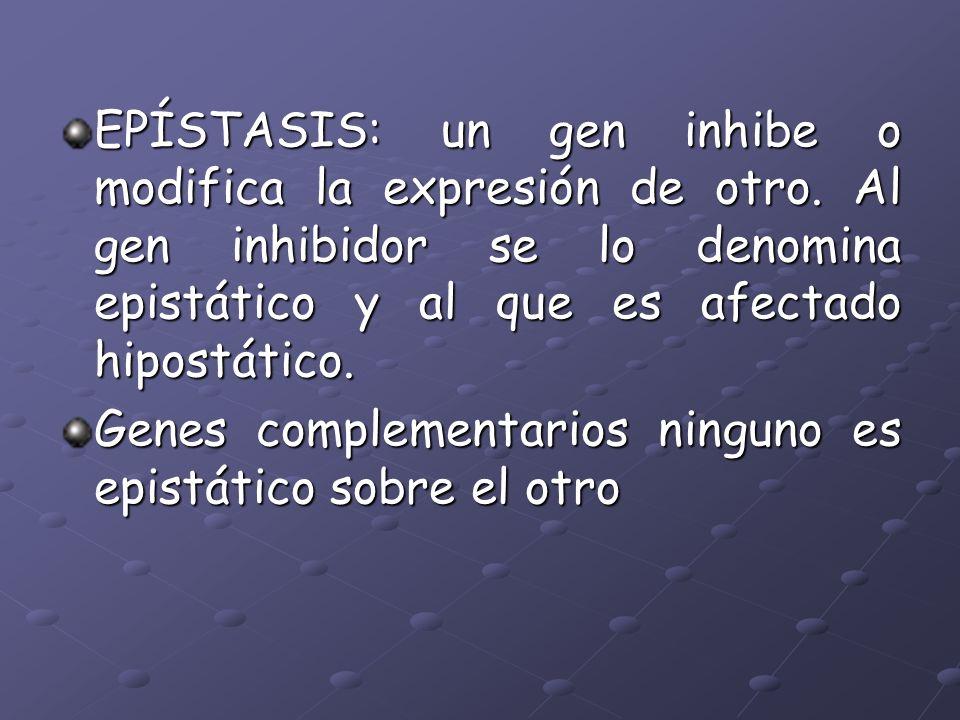 EPÍSTASIS: un gen inhibe o modifica la expresión de otro. Al gen inhibidor se lo denomina epistático y al que es afectado hipostático. Genes complemen