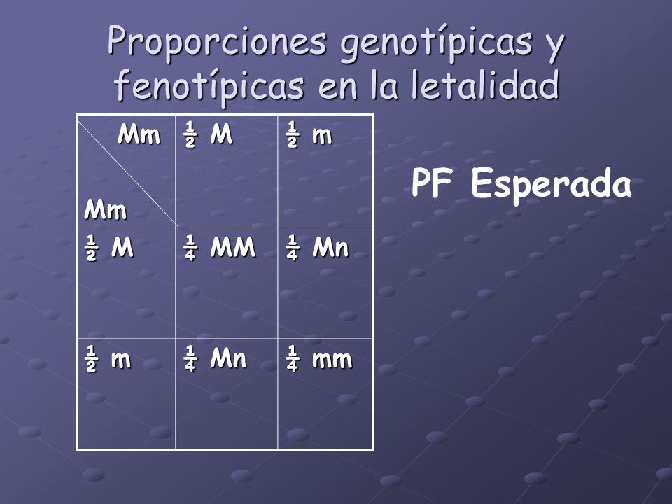 Proporciones genotípicas y fenotípicas en la letalidad Mm MmMm ½ M ½ m ½ M ¼ MM ¼ Mn ½ m ¼ Mn ¼ mm PF Esperada