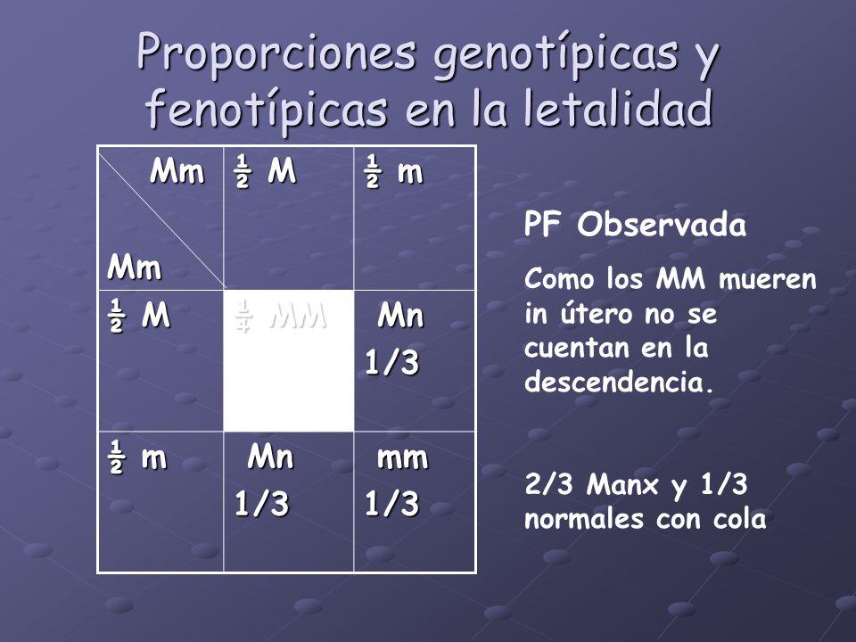 Proporciones genotípicas y fenotípicas en la letalidad Mm MmMm ½ M ½ m ½ M ¼ MM Mn Mn1/3 ½ m Mn Mn1/3 mm mm1/3 PF Observada Como los MM mueren in úter