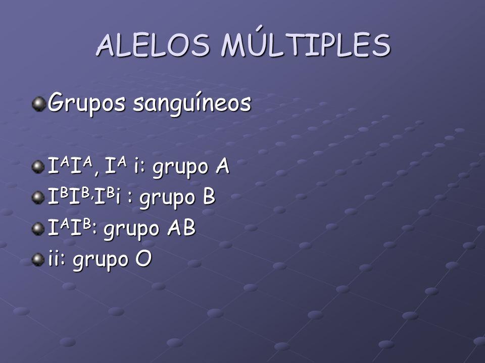 ALELOS MÚLTIPLES Grupos sanguíneos I A I A, I A i: grupo A I B I B, I B i : grupo B I A I B : grupo AB ii: grupo O