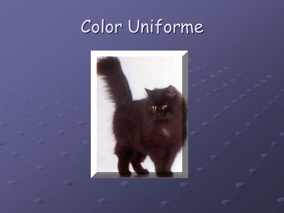 Color Uniforme