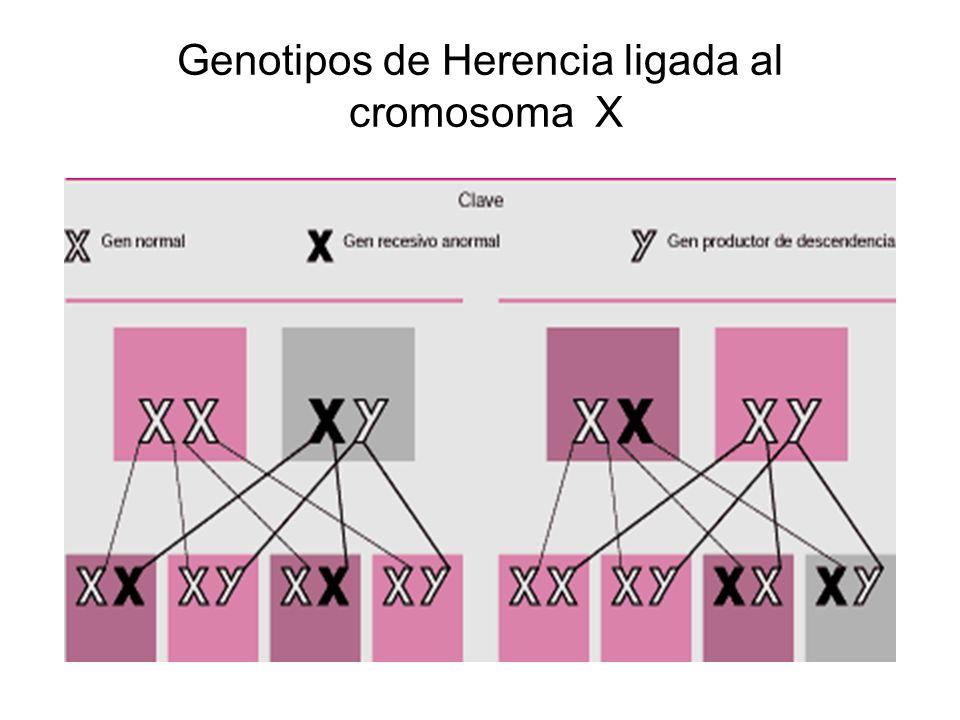 Genotipos de Herencia ligada al cromosoma X
