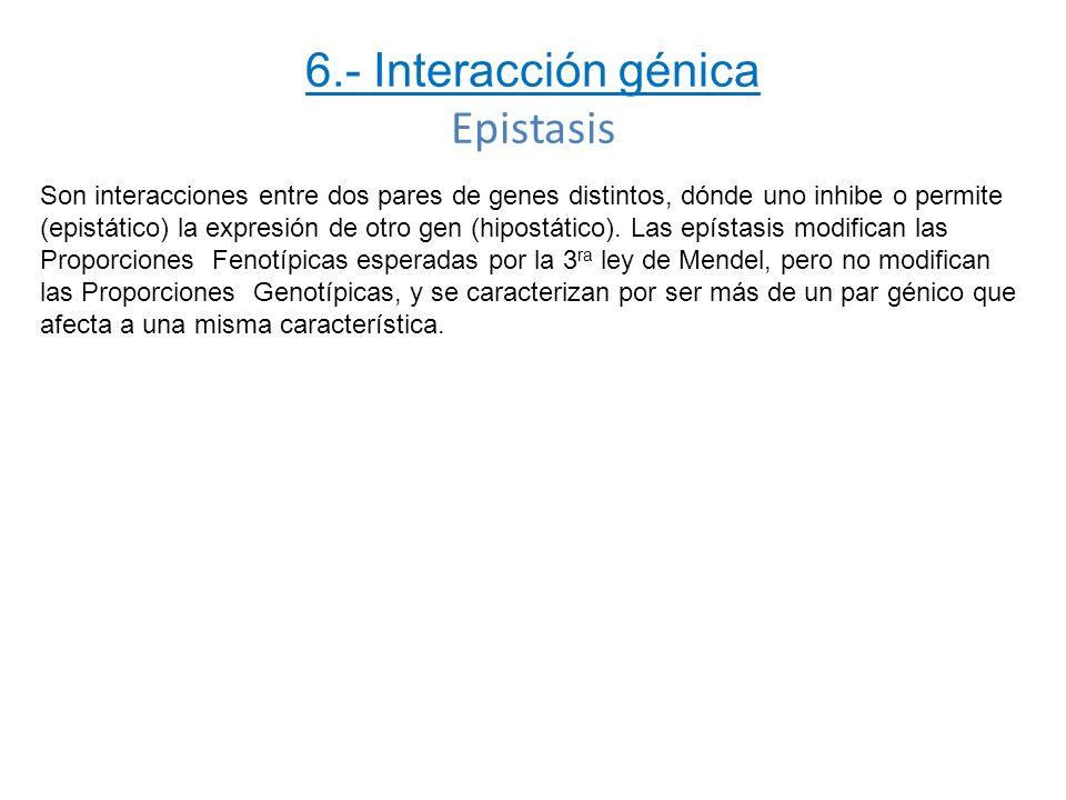 6.- Interacción génica Epistasis Son interacciones entre dos pares de genes distintos, dónde uno inhibe o permite (epistático) la expresión de otro ge
