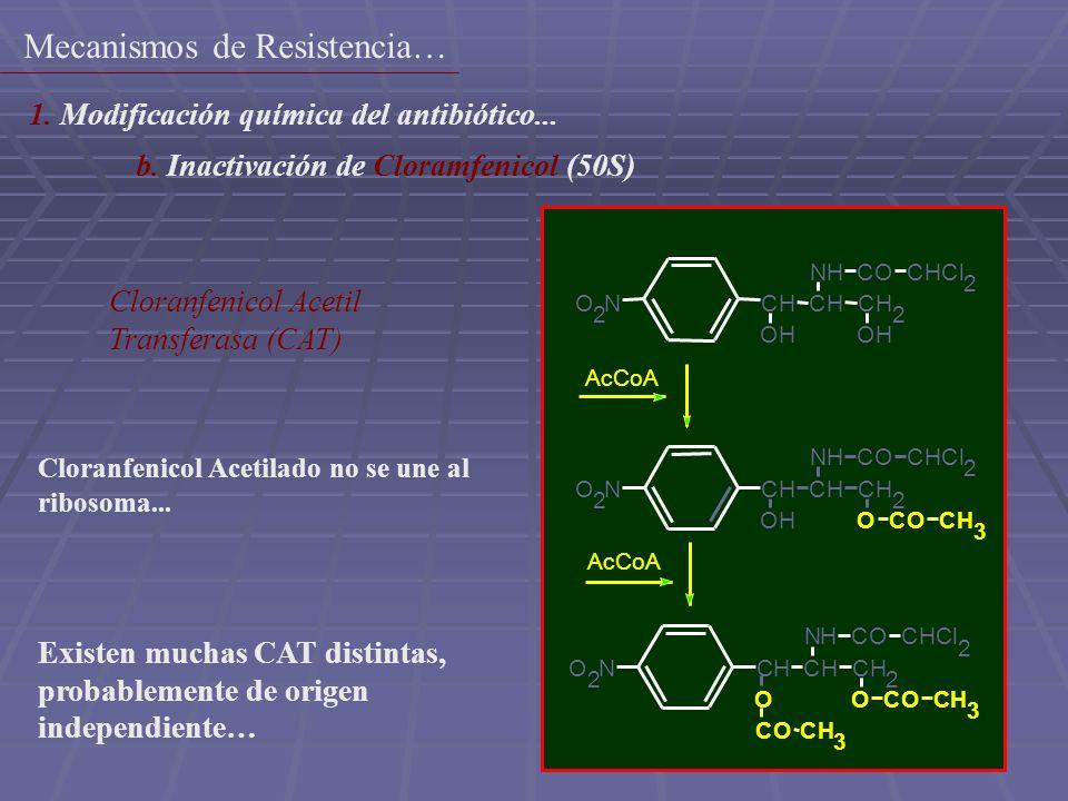 11 3 O 2 NCHCHCH 2 OHOH NHCOCHCl 2 O 2 NCHCHCH 2 OH NHCOCHCl 2 OCOCH 3 O 2 NCHCHCH 2 O NHCOCHCl 2 OCOCH 3 COC H AcCoA Cloranfenicol Acetil Transferasa