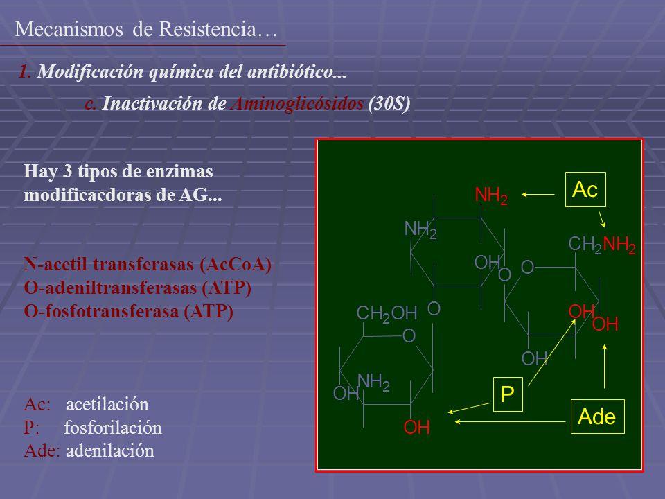 12 NH 2 O OH O NH 2 O OH OH OH CH 2 NH 2 O CH 2 OH OH NH 2 OH Ac Ade P Hay 3 tipos de enzimas modificacdoras de AG... N-acetil transferasas (AcCoA) O-