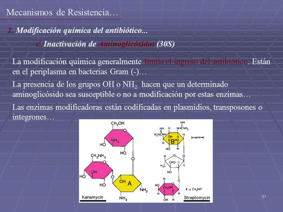 13 La modificación química generalmente limita el ingreso del antibiótico. Están en el periplasma en bacterias Gram (-)… La presencia de los grupos OH