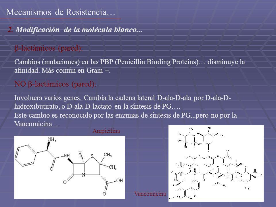 15 -lactámicos (pared): Cambios (mutaciones) en las PBP (Penicillin Binding Proteins)… disminuye la afinidad. Más común en Gram +. Ampicilina NO -lact